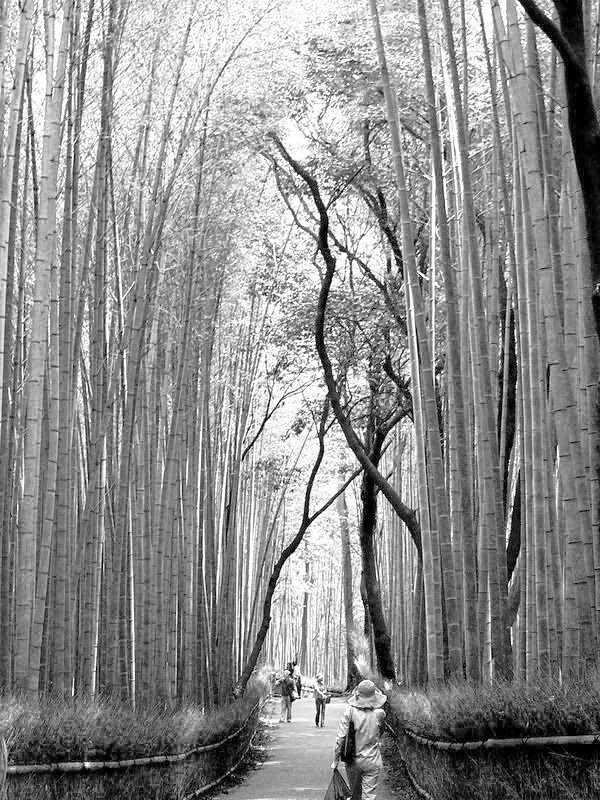Jardin japonais pernay r ves d 39 asie vysages for Jardin 2000 epernay