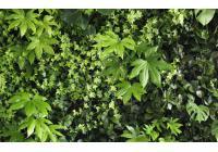 Conception d'un mur végétal intérieur