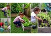 Le jardinage dans les écoles!